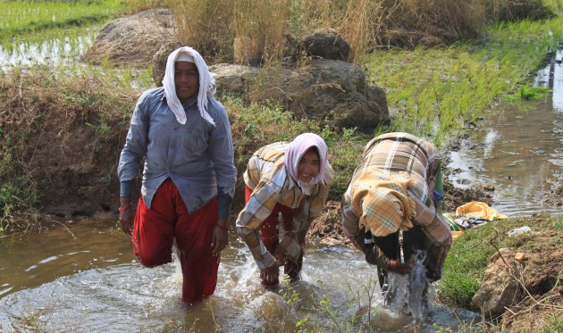 Women working in rice paddies, India
